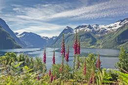 Norwegen Natur original R by web